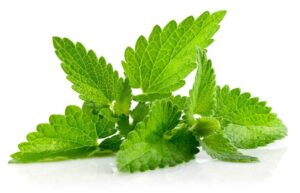 10ml Concentrated Mint Flavor for Eliquid / Ejuice DIY / Self Mixing