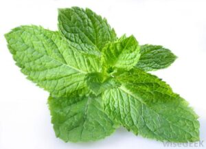 10ml Concentrated Spearmint Flavor for Eliquid / Ejuice DIY / Self Mixing