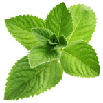 10ml Concentrated Menthol Flavor for Eliquid / Ejuice DIY / Self Mixing
